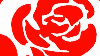 labour rose_colour
